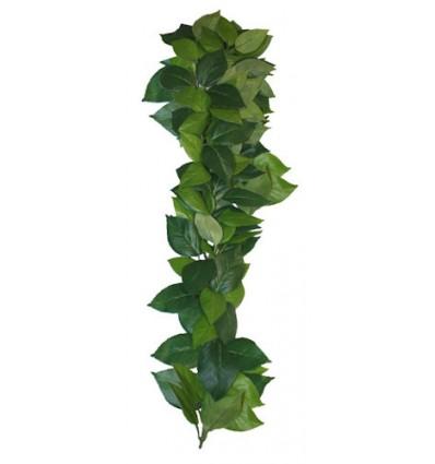 Ficus hængeplante - 35cm