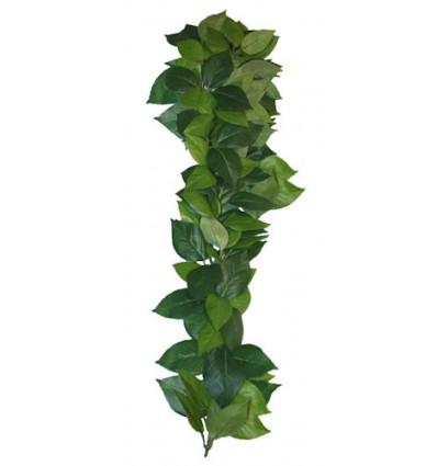 Ficus hængeplante - 45cm.