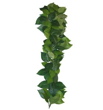 Ficus hængeplante - 60cm.
