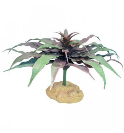 Stjerne kaktus - 13cm.