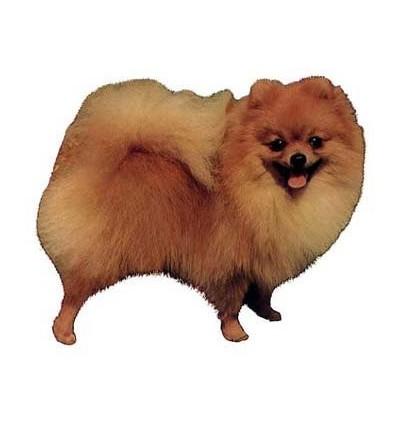 Dekal Pomeranian Helfigur Lille ca. 8 cm.