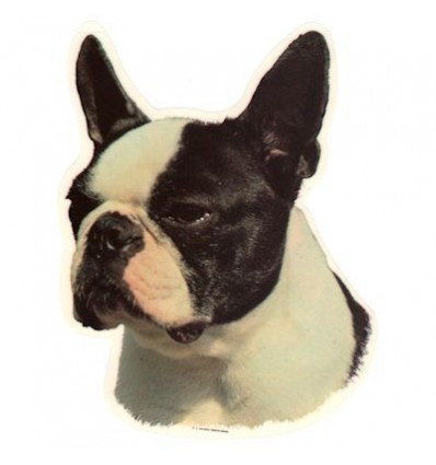 Dekal Boston Terrier Stor ca. 17 cm.
