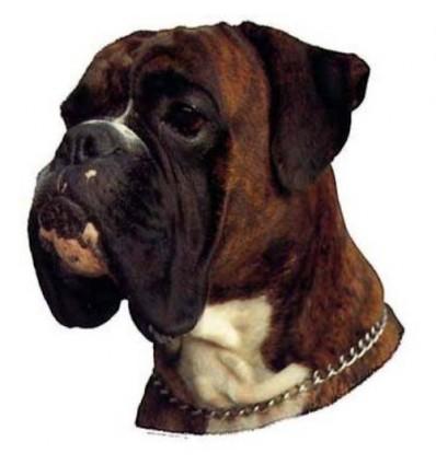 Dekal Boxer Brindle Lille ca. 8 cm.