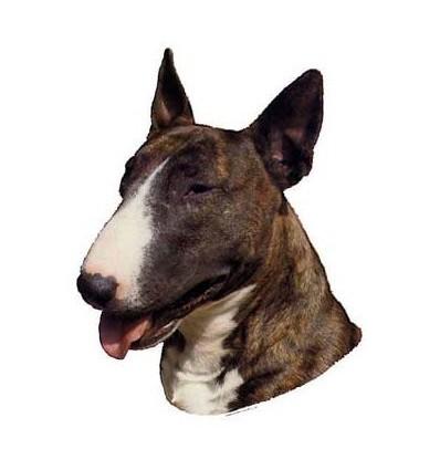 Dekal Bull Terrier Brindle/Hvid Stor ca. 17 cm.
