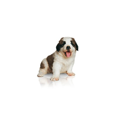 Royal Canin Baby Dog Milk 2 kg.