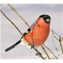 Vildfugle og havens dyr